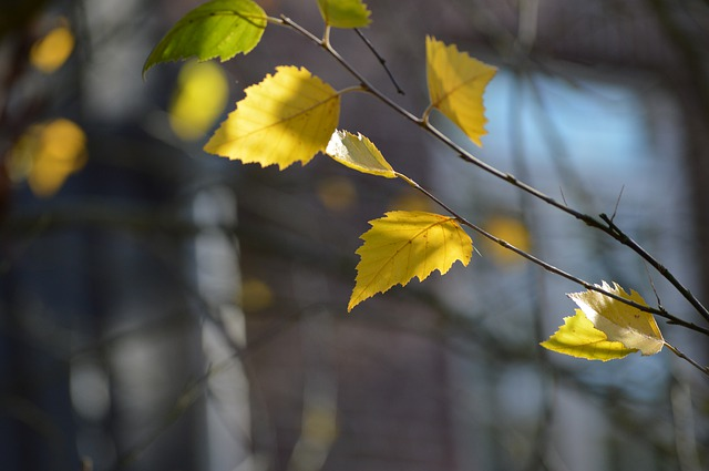 listnatá větvička
