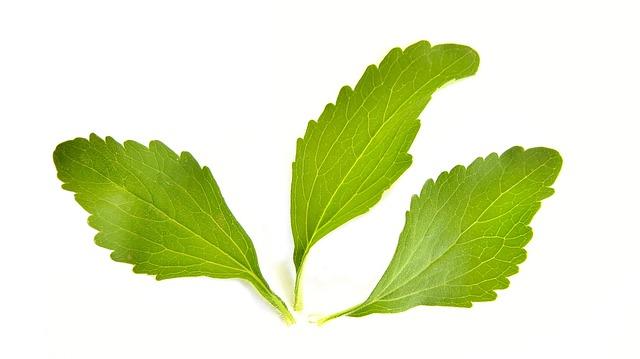 bylinka stevia